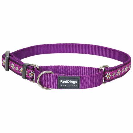 Red Dingo Daisy Chain Purple Medium Martingale nyakörv