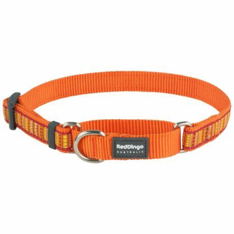 Red Dingo Lotzadotz orange Medium Martingale nyakörv